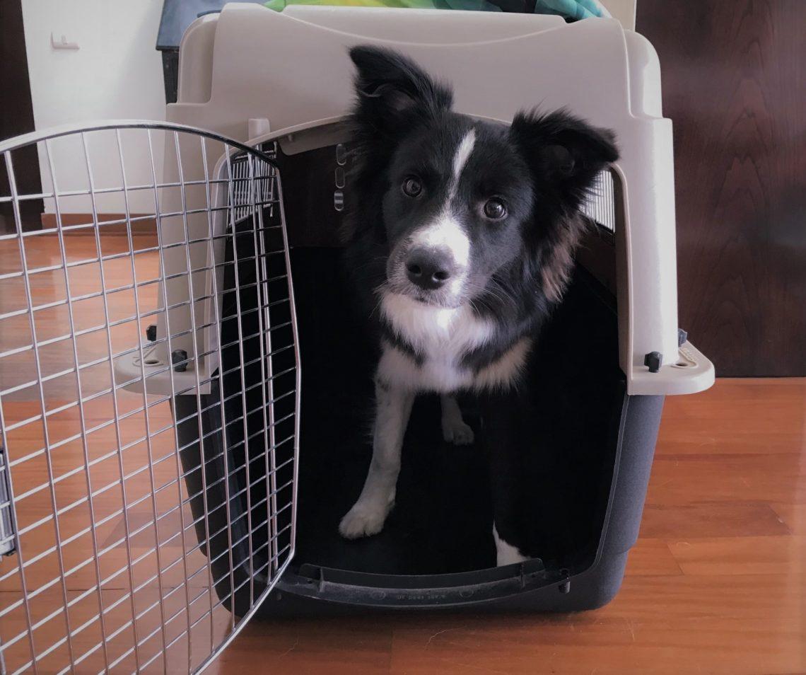 El kennel ¿Por qué mi perro debería usarlo? ¿Que beneficios tiene?